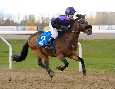Too Bright Too vinner med Julia Blom | Ponnygalopp Jägersro 160424 | Foto: Stefan Olsson / Svensk Galopp