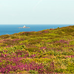 Heather,Bruyère   - Lighthouse of Tévennec   -  Pointe du Raz*