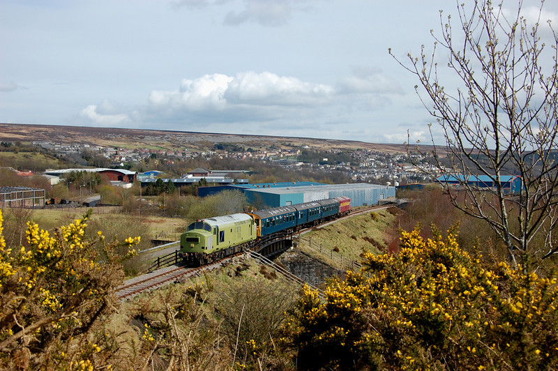 Glimpsed through the gorse 37216 growls up the hill to Furnace Sidings