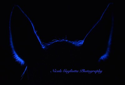 Electric Blue silhouette of horse's ears
