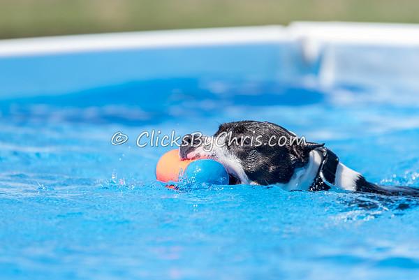 Pool Rental - Saturday, April 11, 2015 - Frame: 3654