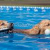 Pool Rental - Monday, May 25, 2015 - Frame: 1243
