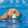 Pool Rental - Monday, May 25, 2015 - Frame: 1242