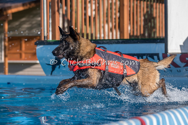 Pool Rental - Southtown K9 - Wednesday, May 31, 2017