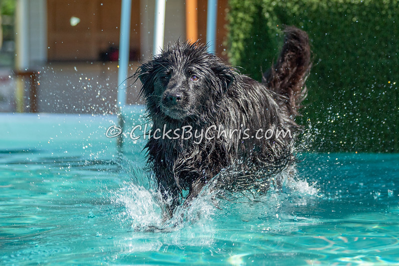 Dock Diving Pool Rental at Southtown K9 on Friday, June 12, 2020