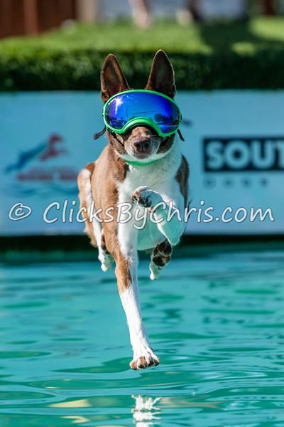 Dock Diving: Pool-Rental 06/13/2021