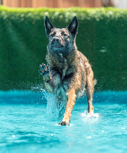 Dock Diving Pool Rental at Southtown K9 on Sunday, June 14, 2020