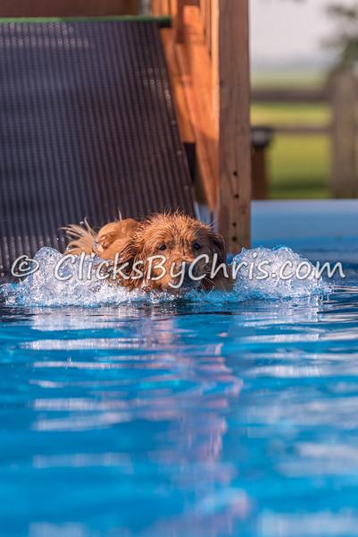 Pool Rental - Sunday, June 21, 2015 - Frame: 3402