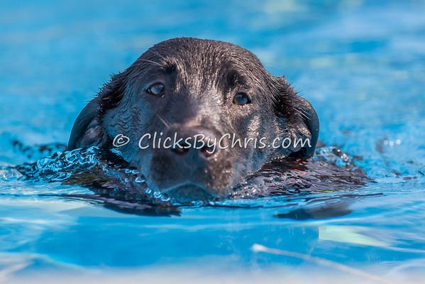 Pool-Rental-20140802-0019