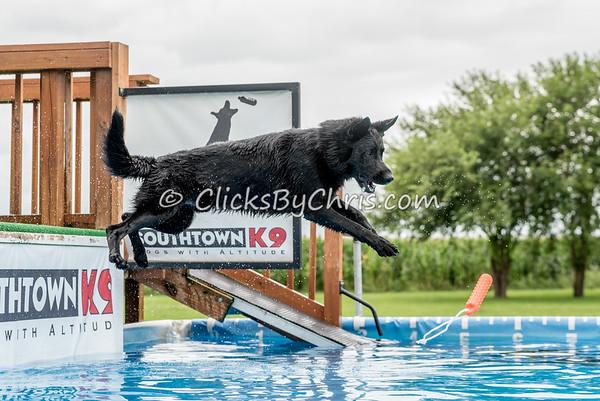 Pool Rental - Southtown K9 - Saturday, Aug. 13, 2016