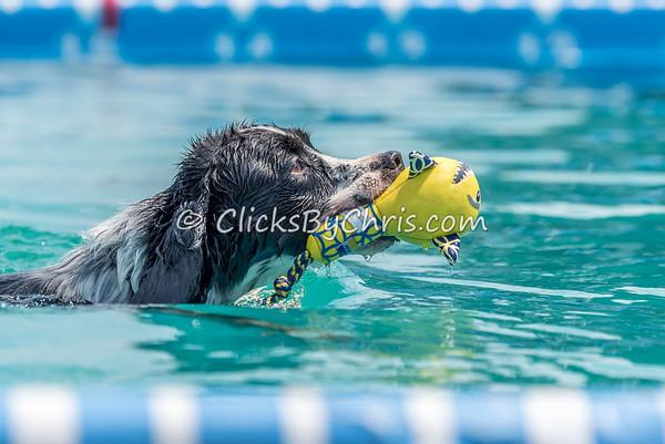 Pool Rental - Saturday, Aug. 15, 2015 - Frame: 2184