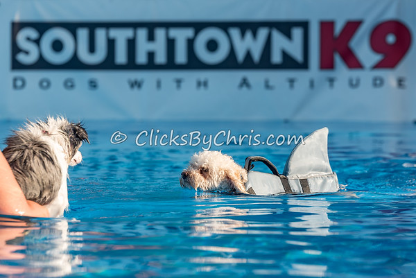 Pool Rental - Southtown K9 - Wednesday, Aug. 17, 2016
