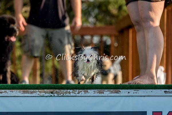 Pool Rental - Southtown K9 - Wednesday, Aug. 17, 2016