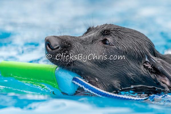 Pool Rental - Tuesday, Sept. 8, 2015 - Frame: 5334