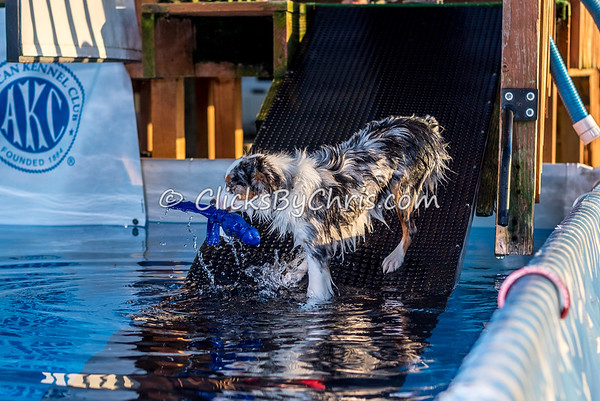 Pool Rental - Southtown K9 - Monday, Oct. 9, 2017