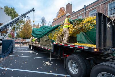 WVAC Tree letting 10-29-2019-10