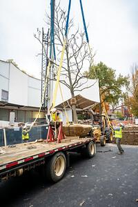 WVAC Tree letting 10-29-2019-24