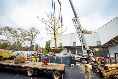 WVAC Tree letting 10-29-2019-29