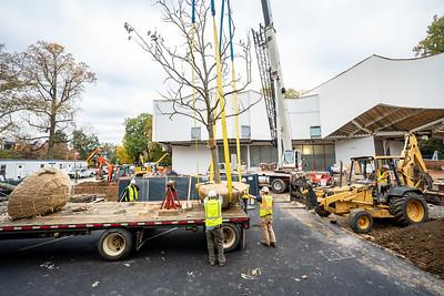 WVAC Tree letting 10-29-2019-26