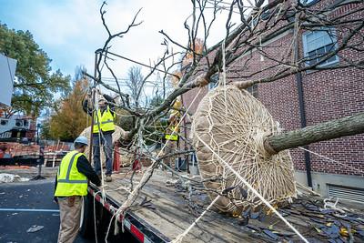 WVAC Tree letting 10-29-2019-13