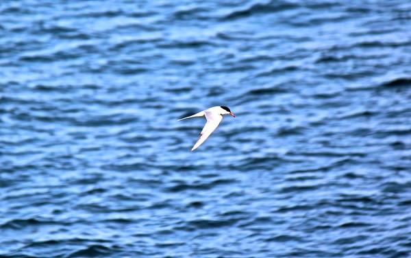 15.07.12 Popham Beach - Birds