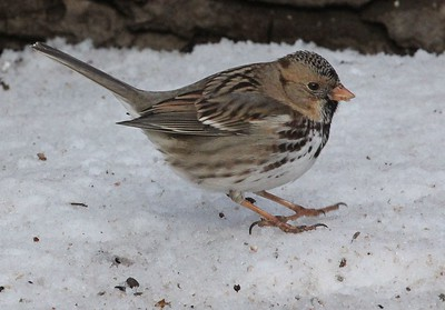 """Here it is doing the """"sparrow hop."""""""