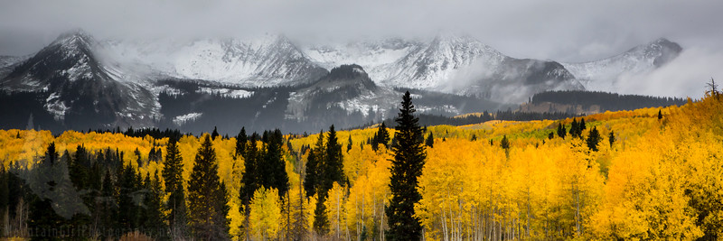 Kebler Snow and Gold in the Fog
