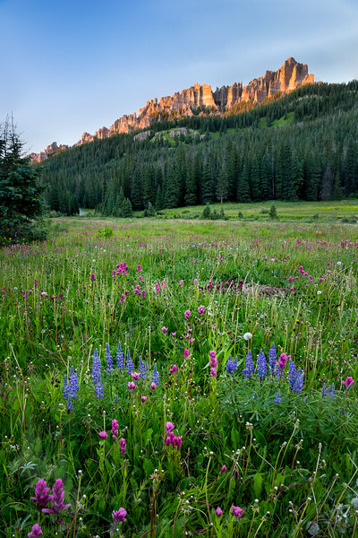 West Fork Meadow Wildflowers