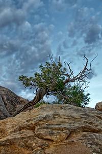 Desert Rose and a Cottonball Sky
