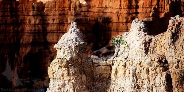 Bryce Canyon Hoodoos and Tree