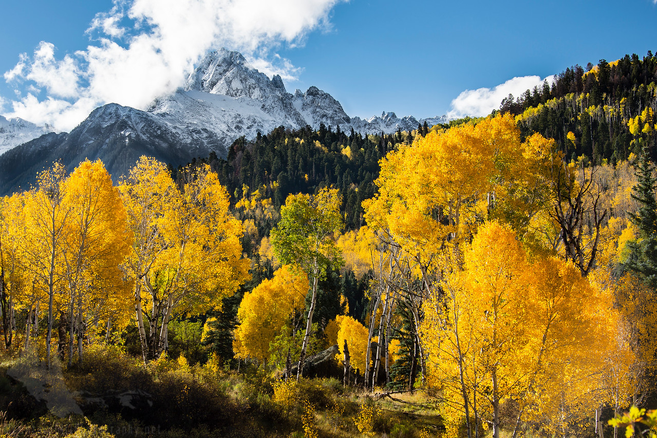 Sneffels Snow and Gold