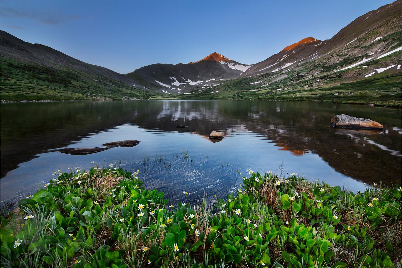 Marsh Marigolds at Hancock Lake