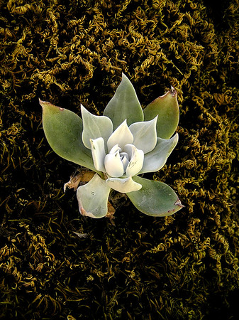 Artful Modern Desert Flower and Plant Wall Decor