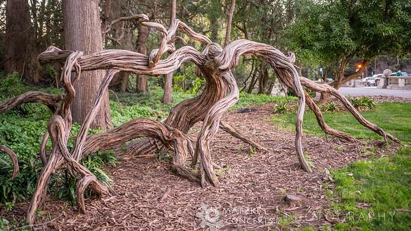 Alien Tree in Golden Gate Park