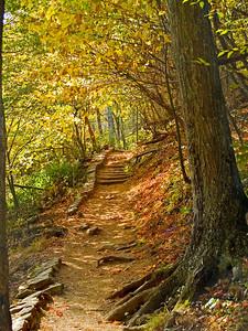 """Autumn Trail"" An Autumn trail in Shenandoah National Park in West Virginia."