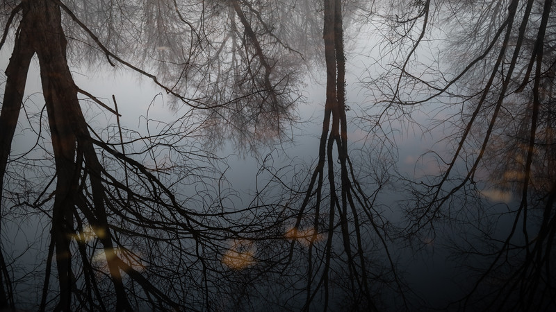 Winter Trees Reflected