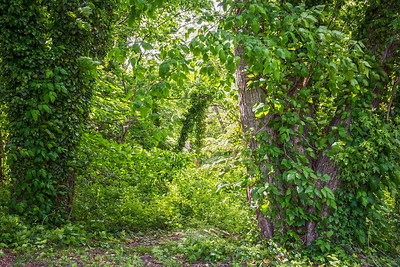 Vines and Greenery