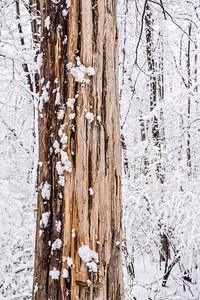 Bare Wood White Snow