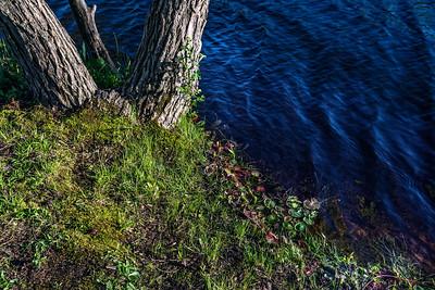 Shoreline Background