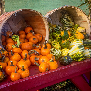 Bushels of Pumpkins and gourds