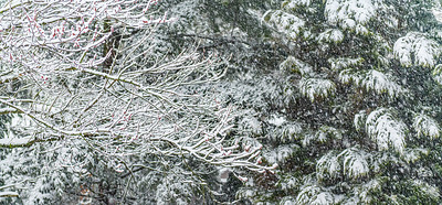 Snow Branches Background