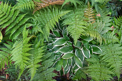 Fern Plants Background