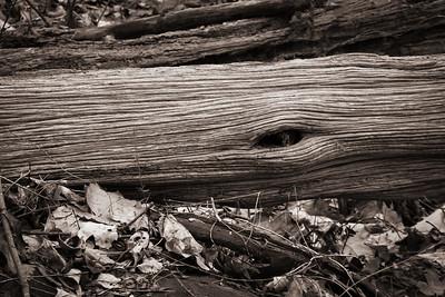 Sepia Toned Wood