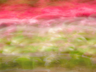 Spring Colors Abstract