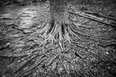 Spreading Roots