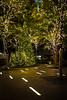 Christmas Trees Zuccotti Park