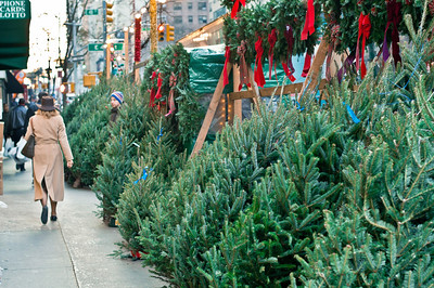 """""""Sidewalk Trees""""  Christmas trees for sale along the sidewalk along 2nd Ave. in Manhattan."""
