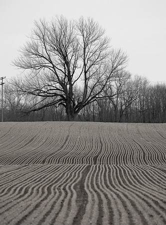 """Field and Tree""   A Winter view of farm rows and tree landscape in Marlboro, New Jersey."