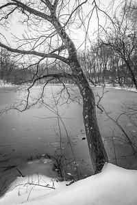 Tree on Pond