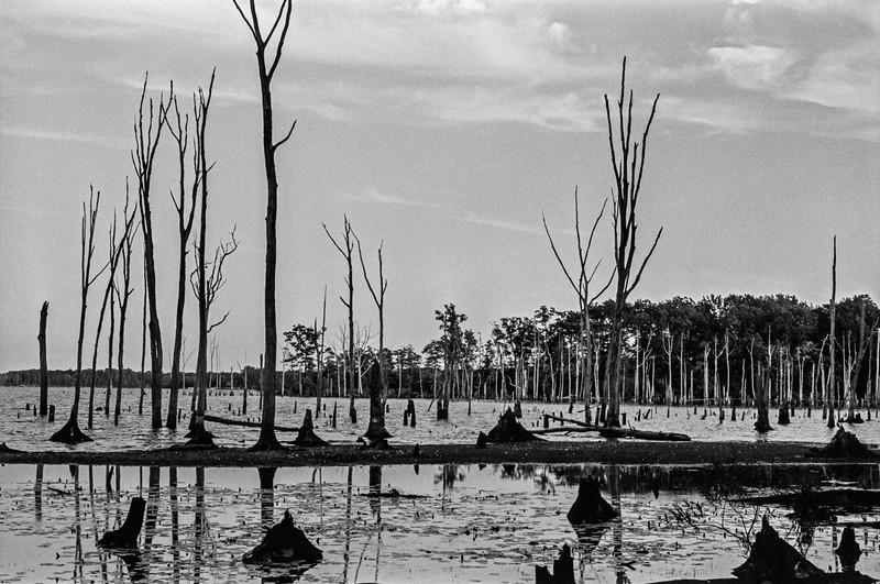 Manasquan Reservoir Landscape